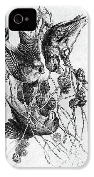 Blackburn Birds, 1895 IPhone 4 / 4s Case by Granger