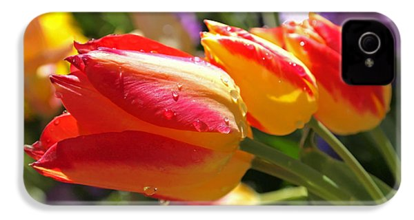 Bowing Tulips IPhone 4 / 4s Case by Rona Black