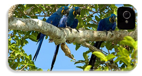 Hyacinth Macaws, Brazil IPhone 4 / 4s Case by Gregory G. Dimijian, M.D.