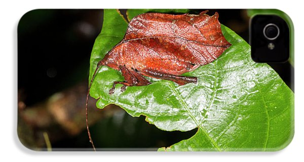 Leaf Mimic Katydid IPhone 4 / 4s Case by Dr Morley Read