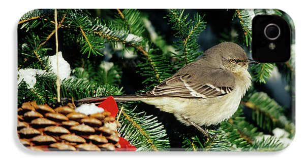 Northern Mockingbird (mimus Polyglottos IPhone 4 / 4s Case by Richard and Susan Day
