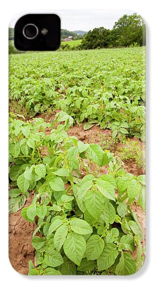 Potatoes Growing At Washingpool Farm IPhone 4 / 4s Case by Ashley Cooper