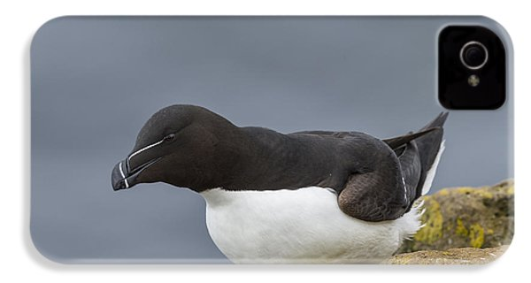 Razorbill IPhone 4 / 4s Case by John Shaw