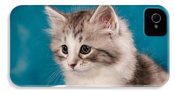 Sibirian Cat Kitten IPhone 4 / 4s Case by Doreen Zorn
