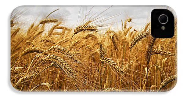 Wheat IPhone 4 / 4s Case by Elena Elisseeva