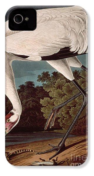 Whooping Crane IPhone 4 / 4s Case by John James Audubon