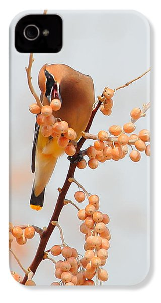Cedar Wax Wing IPhone 4 / 4s Case by Floyd Tillery
