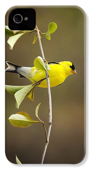 American Goldfinch IPhone 4 / 4s Case by Christina Rollo