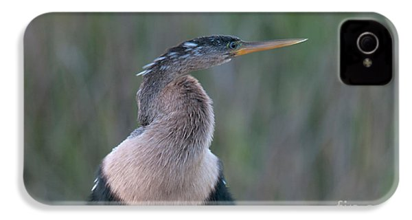 Anhinga IPhone 4 / 4s Case by Mark Newman