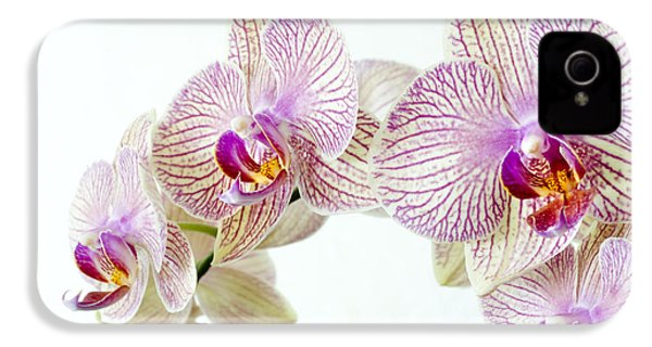 Phalaenopsis Orchid Phalaenopsis Sp IPhone 4 / 4s Case by Lawrence Lawry