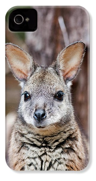 Tammar Wallaby (macropus Eugenii IPhone 4 / 4s Case by Martin Zwick