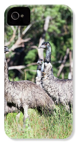 Emu (dromaius Novaehollandiae IPhone 4 / 4s Case by Martin Zwick
