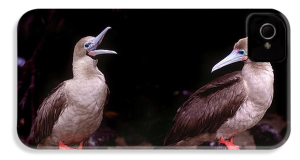 South America, Ecuador, Galapagos IPhone 4 / 4s Case by Jaynes Gallery