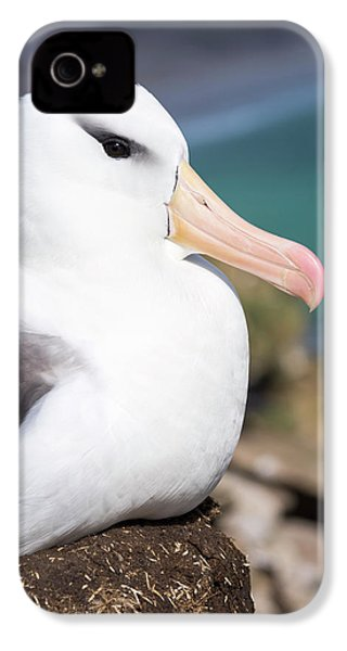 Black-browed Albatross (thalassarche IPhone 4 / 4s Case by Martin Zwick