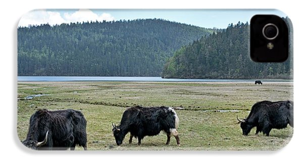A Herd Of Yaks In Potatso National Park IPhone 4 / 4s Case by Tony Camacho