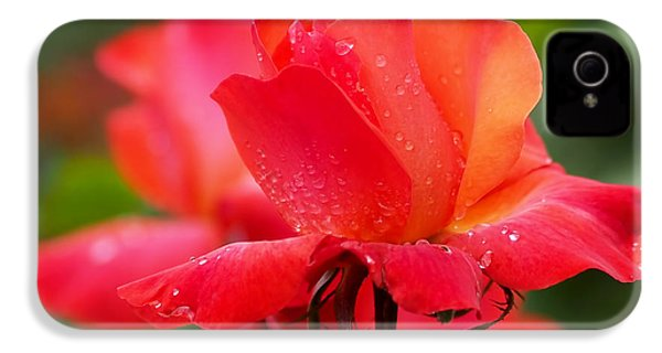 A Tintinara Rose In The Rain IPhone 4 / 4s Case by Rona Black