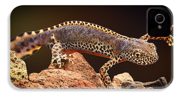 Alpine Newt IPhone 4 / 4s Case by Dirk Ercken
