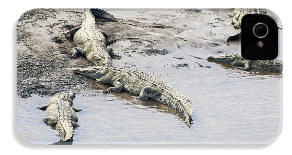 American Crocodiles (crocodylus Acutus) IPhone 4 / 4s Case by Photostock-israel