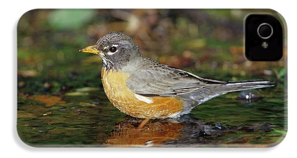 American Robin (turdis Migratorius IPhone 4 / 4s Case by Richard and Susan Day
