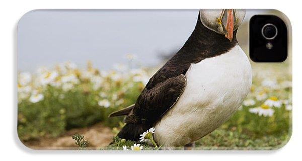 Atlantic Puffin In Breeding Plumage IPhone 4 / 4s Case by Sebastian Kennerknecht