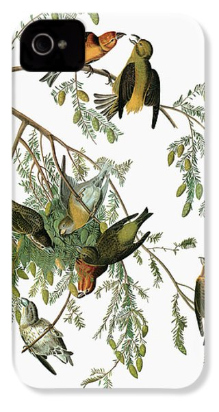 Audubon Crossbill IPhone 4 / 4s Case by Granger