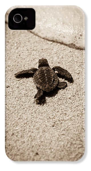 Baby Sea Turtle IPhone 4 / 4s Case by Sebastian Musial
