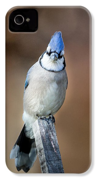 Backyard Birds Blue Jay IPhone 4 / 4s Case by Bill Wakeley