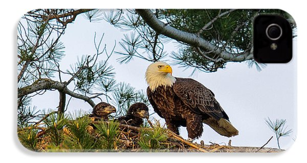 Bald Eagle With Eaglets  IPhone 4 / 4s Case by Everet Regal