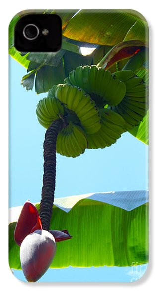 Banana Stalk IPhone 4 / 4s Case by Carey Chen
