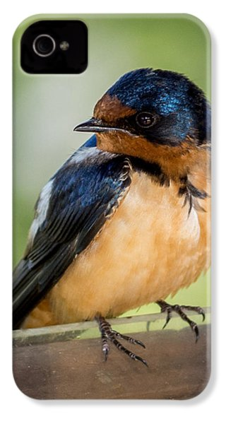 Barn Swallow IPhone 4 / 4s Case by Ernie Echols