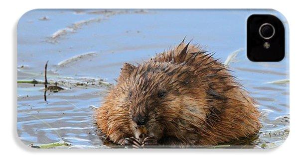 Beaver Portrait IPhone 4 / 4s Case by Dan Sproul