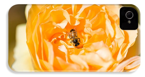 Bee Pollinating A Yellow Rose, Beverly IPhone 4 / 4s Case by Panoramic Images