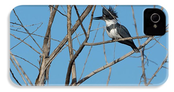 Belted Kingfisher 4 IPhone 4 / 4s Case by Ernie Echols