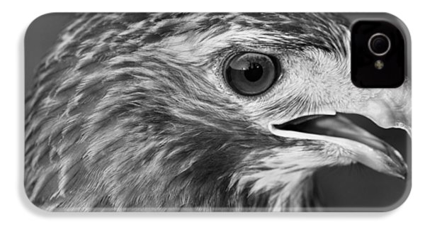Black And White Hawk Portrait IPhone 4 / 4s Case by Dan Sproul