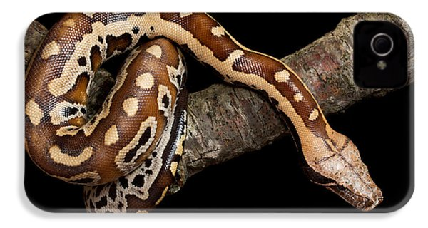 Blood Python Python Brongersmai IPhone 4 / 4s Case by David Kenny