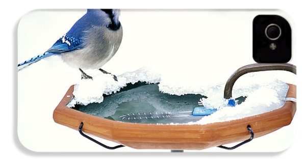Blue Jay At Heated Birdbath IPhone 4 / 4s Case by Steve and Dave Maslowski