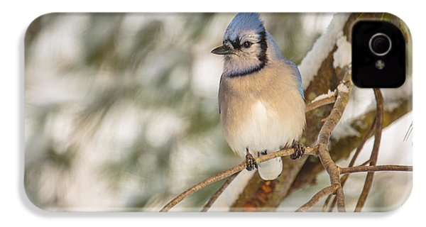 Blue Jay IPhone 4 / 4s Case by Everet Regal