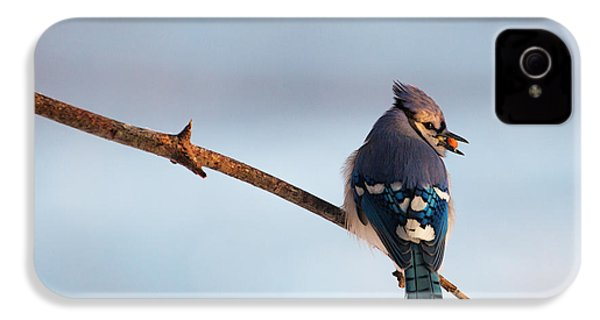 Blue Jay With Nuts IPhone 4 / 4s Case by Everet Regal