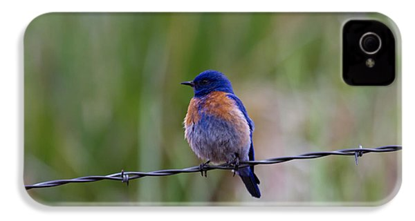 Bluebird On A Wire IPhone 4 / 4s Case by Mike  Dawson