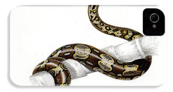 Boa Constrictor IPhone 4 / 4s Case by Collection Abecasis