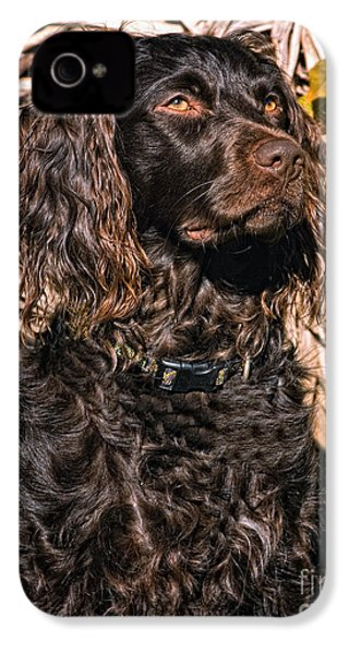 Boykin Spaniel Portrait IPhone 4 / 4s Case by Timothy Flanigan