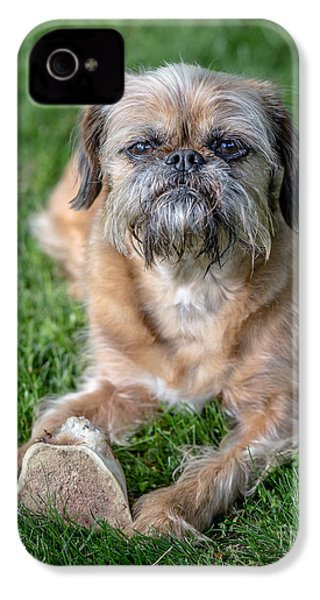 Brussels Griffon IPhone 4 / 4s Case by Edward Fielding