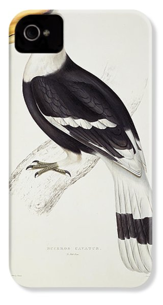 Great Hornbill IPhone 4 / 4s Case by John Gould