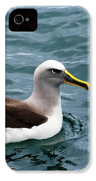 Buller's Albatross (thalassarche Bulleri IPhone 4 / 4s Case by Micah Wright