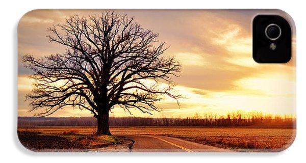 Burr Oak Silhouette IPhone 4 / 4s Case by Cricket Hackmann