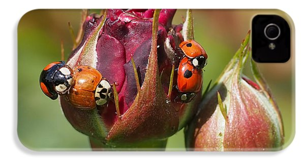 Busy Ladybugs IPhone 4 / 4s Case by Rona Black