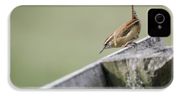 Carolina Wren Two IPhone 4 / 4s Case by Heather Applegate