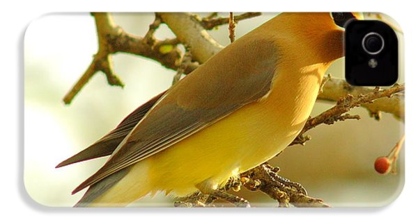 Cedar Waxwing IPhone 4 / 4s Case by Robert Frederick