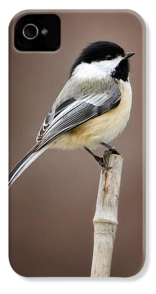 Chickadee IPhone 4 / 4s Case by Bill Wakeley