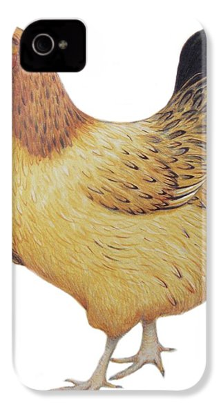 Chicken IPhone 4 / 4s Case by Ele Grafton